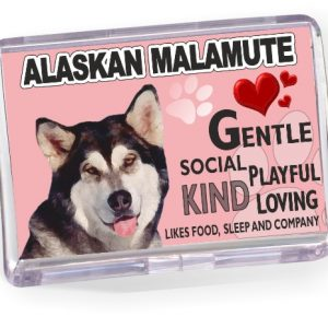 Fridge Magnet - Alaskan Malamute No2